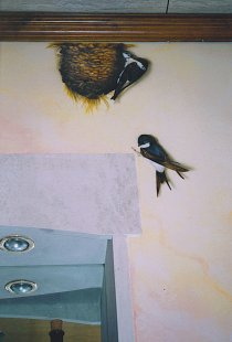 Swallows and nest on pâtine marbled realized in trompe-l'oeil.